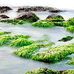 Почему водоросли - это не растения